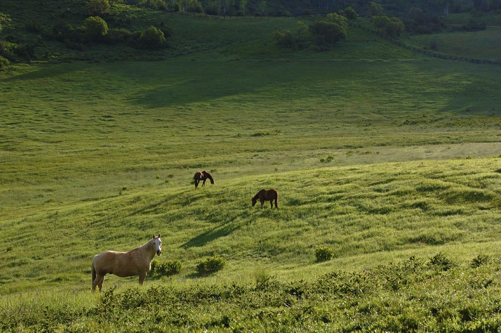 Horse Pasture - Gallery