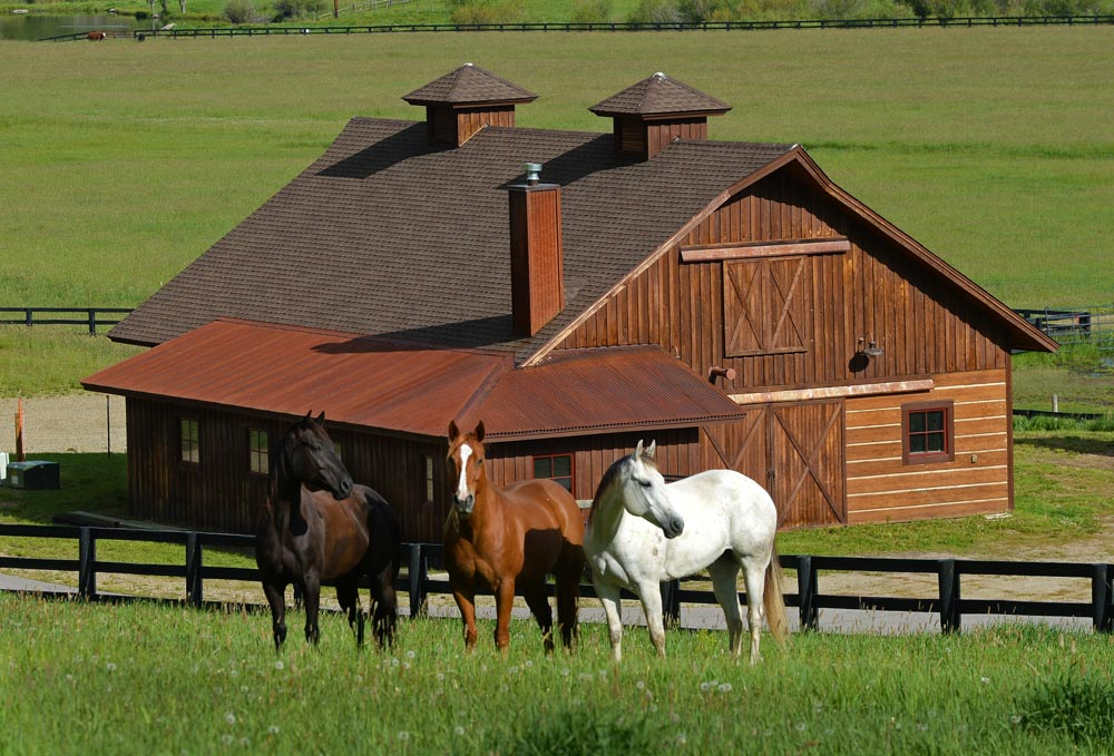 Our Beautiful Barn and Horses