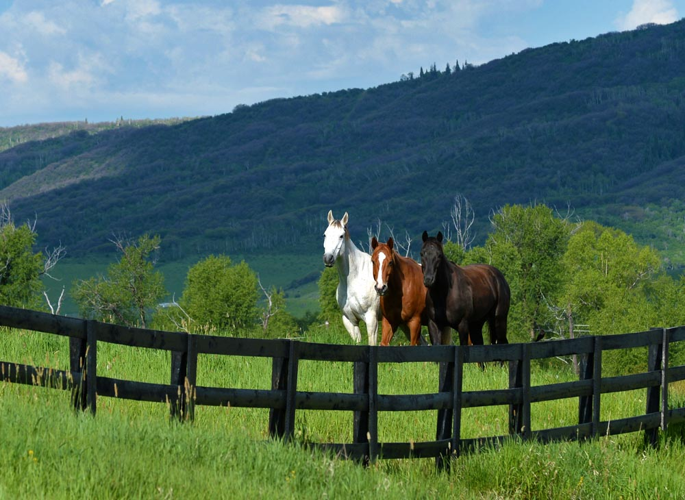 Horses at Alpine Mountain Ranch