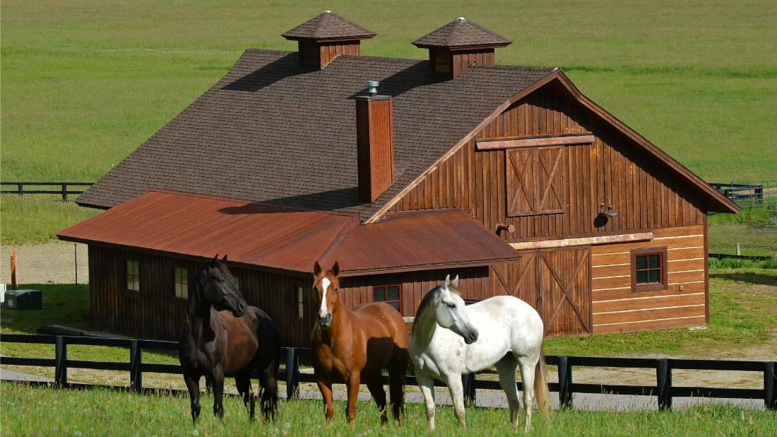 amr barn horses 02 - Amenities