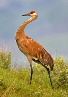 amr preserve crane 02 - The Preserve