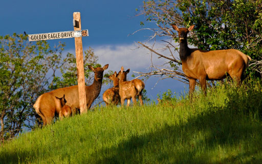 amr preserve elk 04 - The Preserve