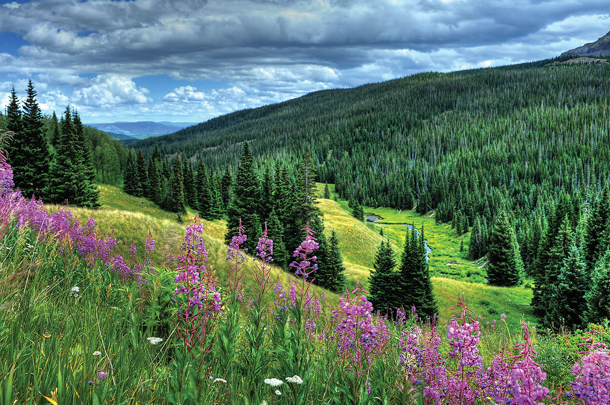 Fireweed flower hike amr - Summer Events