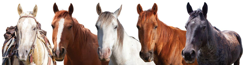 amr horses - HOT Summer Activities: Fly Fishing, Equestrian Program + Golf