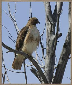 sideimage-hawk