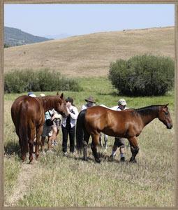 sideimage-horses2