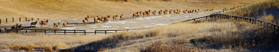 top-header-elk
